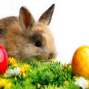 animals, bunnies - nature wallpaper - 128x128