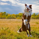 dogs - nature wallpaper - 128x128