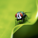 insects - nature wallpaper - 128x128